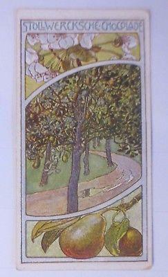 Stollwerk, Gruppe Nr. 175,  Nr.5,    Album Nr. 4,  Brinbaum,    1900  ♥ (59662)