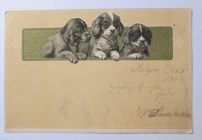 Geburtstag Dackel Hund 1903 Pragekarte 31209 Nr 31209