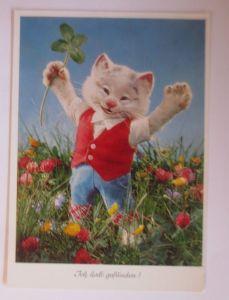 Personifiziert, Katzen, Diehl-Puppe, Pussy, Ich hab´s gefunden   1970 ♥  (66165)
