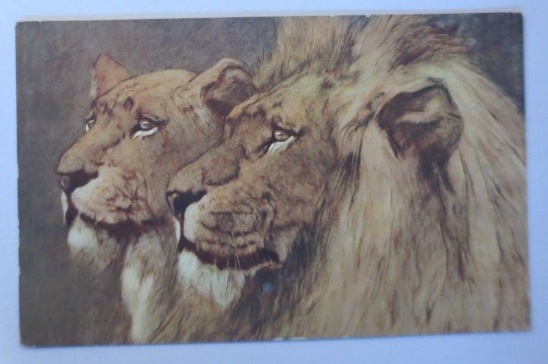 Löwe und Löwin,  1910  ♥   (66995)
