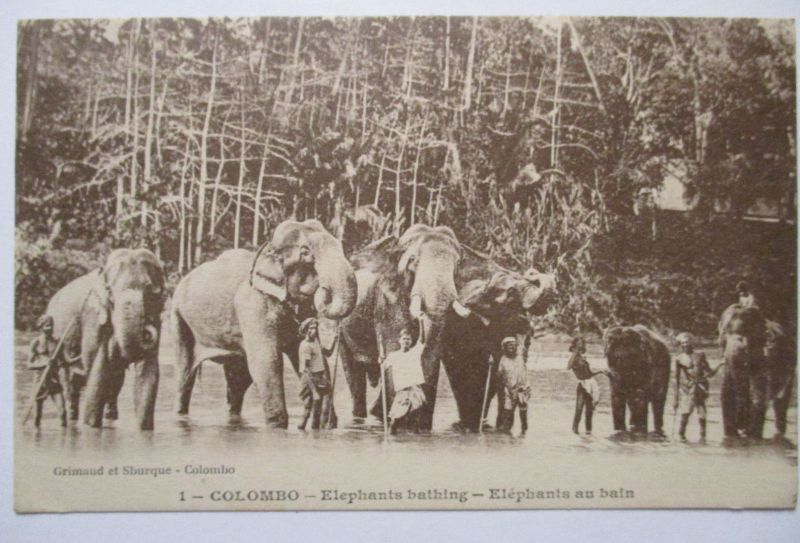 Tiere, Elefanten aus Colombo, 1925 (48173)