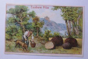 Kaufmannsbilder, Dr. Thompson Seifenpulver, Essbare Pilze ♥ (64125)