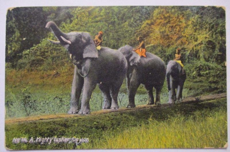 Tiere, Elefanten aus Colombo, A mighty Tusker (48174)