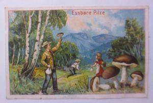 Kaufmannsbilder, Dr. Thompson Seifenpulver, Essbare Pilze ♥ (64123)