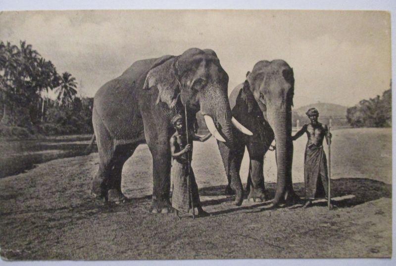 Tiere, Elefanten, Ceylon Elephants, 1921 (48169)