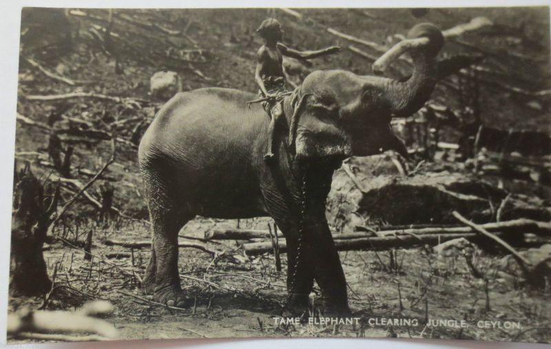 Tiere, Elefanten, Ceylon Tame Elephants clearing Jungle, ca. 1930 (23693)