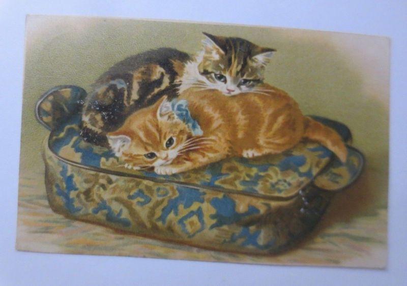 Katzen, Kissen, Schleife, Kuscheln,       1910 ♥ (65376)