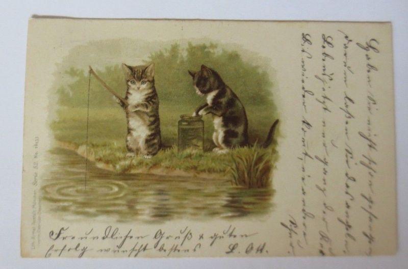 Katzen, Angeln, Glas, Fische,       1899, Litho ♥ (63890)