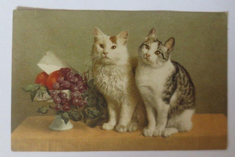 Katzen, Obst, Weintrauben,   1917 ♥ (64381)