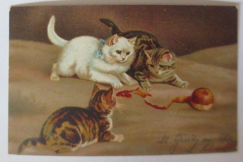 Katzen, Apfel,     1911  ♥ (66283)