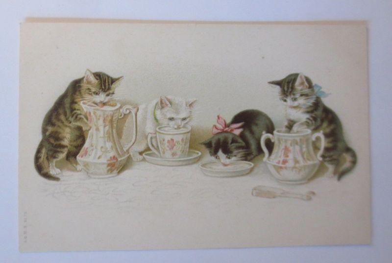Personifiziert, Katzen, Tasse, Milch,   1900  ♥   (65164)