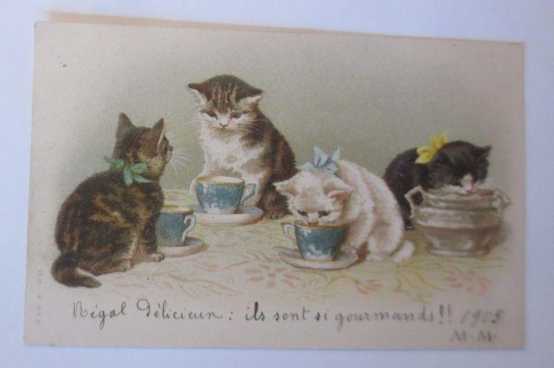 Personifiziert, Katzen, Tasse, Milch,   1903  ♥   (65163)