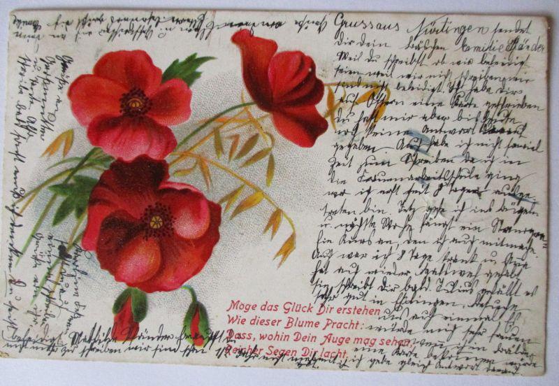 Blumen, Möge das Glück dir erstehen, 1902 aus Nürtingen (19534)