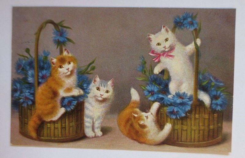 Katzen,  Korb, Blumen,   1912, S. Sperlich  ♥ (67518)