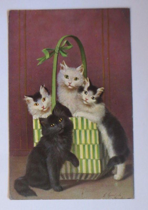 Katzen,  Korb,     1909, S. Sperlich  ♥ (67514)