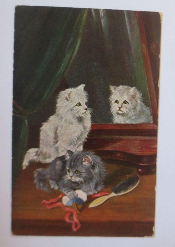 Katzen, Fenster, Bürste,    1920  ♥ (67512)