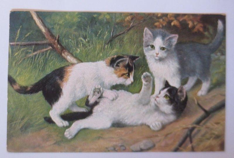 Katzen, Wiese,   1928  ♥ (67511)