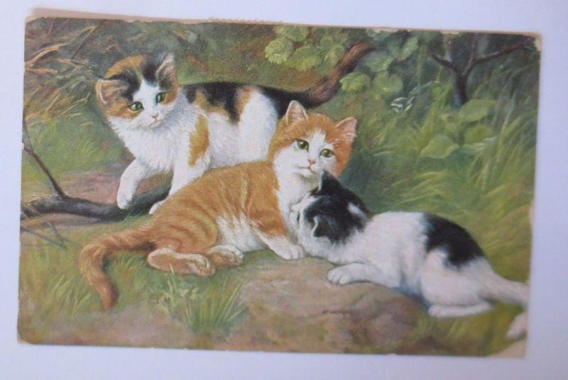 Katzen, Wiese,   1927  ♥ (67510)