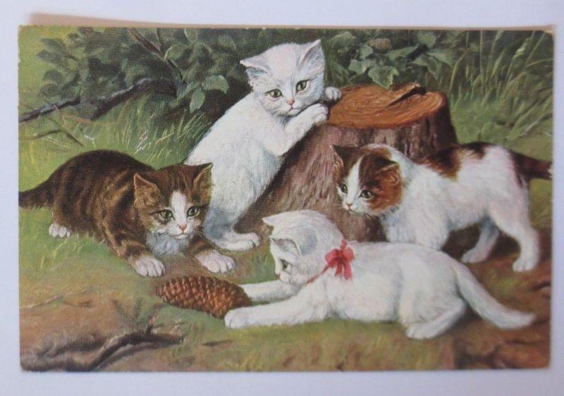 Katzen, Baumstamm, Tannenzapfen,   1936  ♥ (67509)