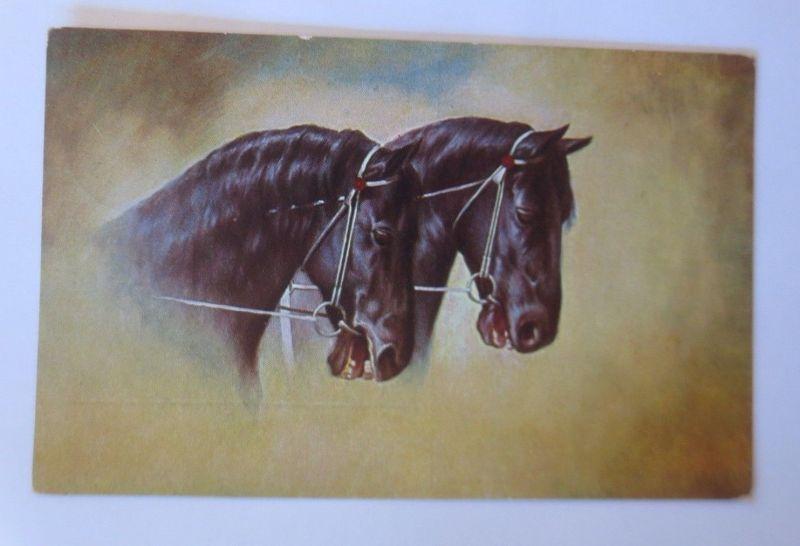 Pferde, Rückseite Reklame Fahrrad, August Stukenbrok Einbeck  1926, ♥ (68315)