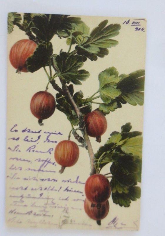 Obst, Früchte, Stachelbeere,  1904 ♥ (68795)