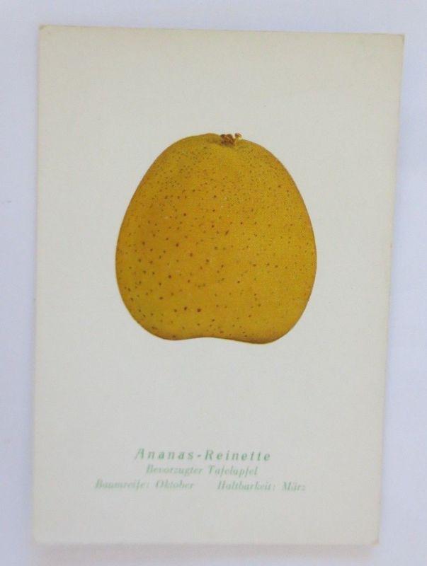 Obst, Früchte, Apfel, Ananas-Reinette, Bevorzugter Tafelapfel,  1945 ♥ (68790)