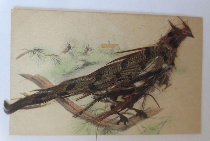 Materialkarte, Vogel mit echten Federn  1908   ♥ (40928)