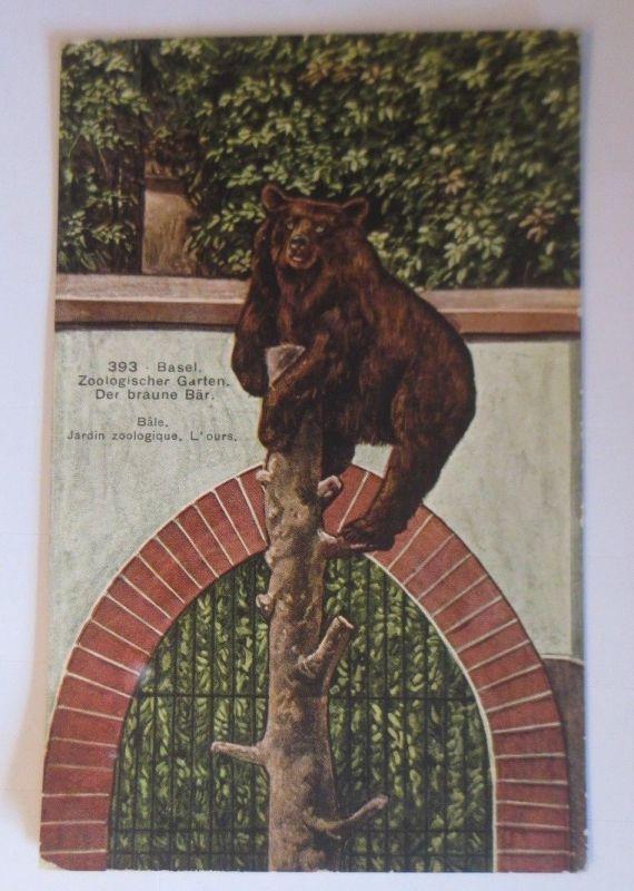 Bär, Basel, Zoologischer Garten der braune Bär,  1909 ♥ (57573)