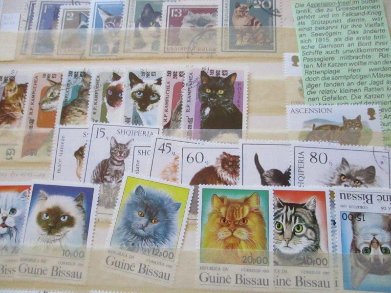 Motiv Katzen, 4 Alben mit über 1000 Marken und über 100 Briefe, BITTE ANSEHEN