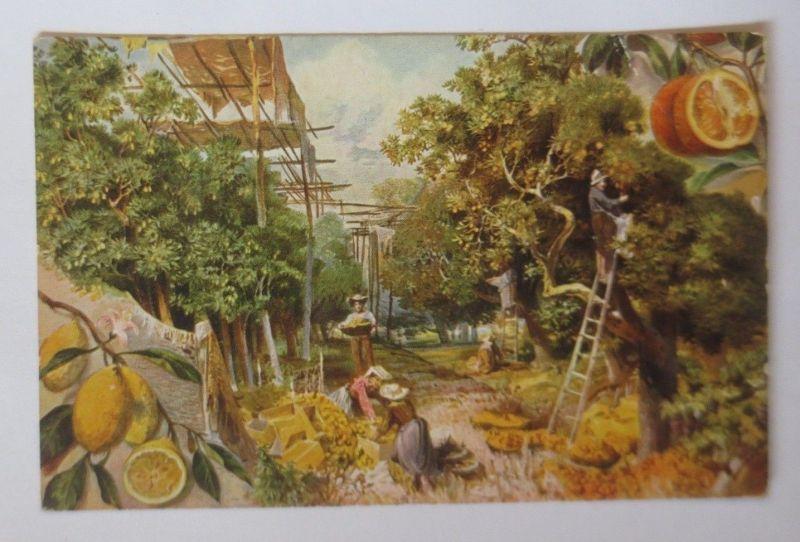Zitronen und Apfelsinen Bäume  1910  ♥ (69663)