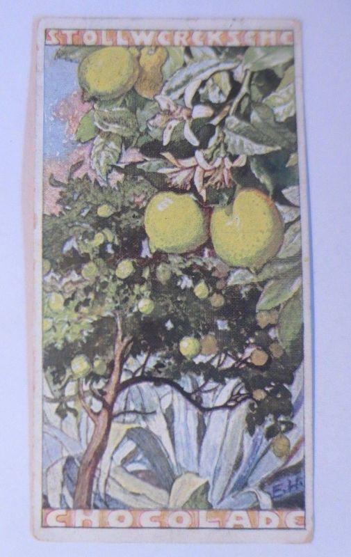 Stollwerck, Gruppe 211, Nr. 5.  Album 5, Der gemeine Zitronenbaum ♥ (69955)