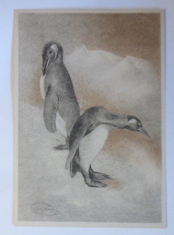 Pinguin, 1945, Swilden ♥ (70168)