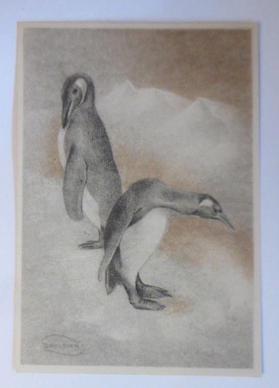 Pinguin, 1945, Swilden ♥ (70167)