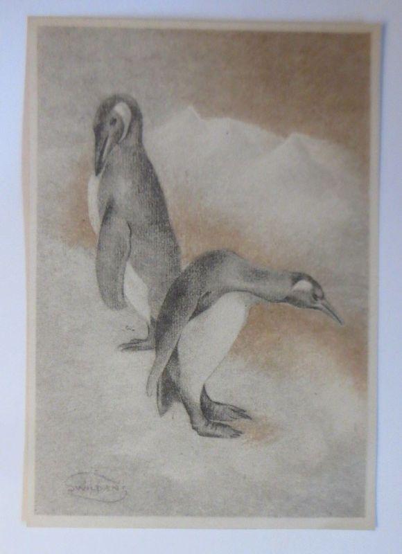 Pinguin, 1945, Swilden ♥ (70166)