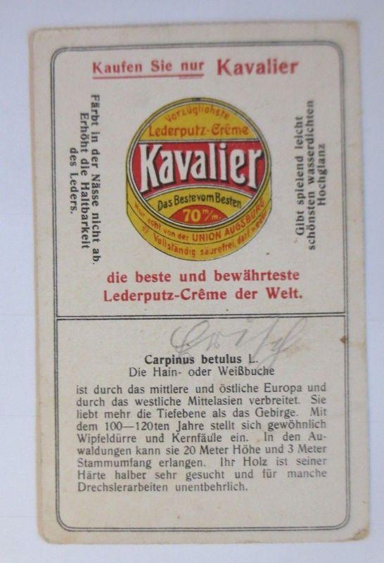 Hain Der Weißbuche Kavalier Creme Lederputz Kaufmannsbilder BtqIwUB