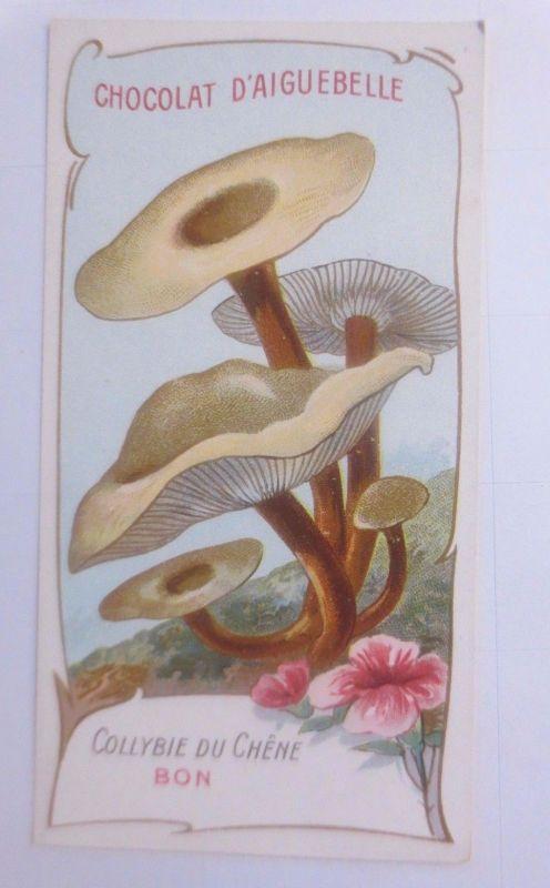 Sammelbild, Chocolat D´ Aiguebelle, Pilze 1910 ♥ (62633)