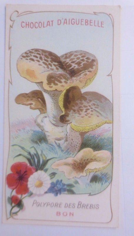 Sammelbild, Chocolat D´ Aiguebelle, Pilze 1910 ♥ (62632)
