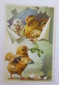 Ostern, Küken, Leinwand, Kleeblatt,  1913, Prägekarte  ♥  (65336)