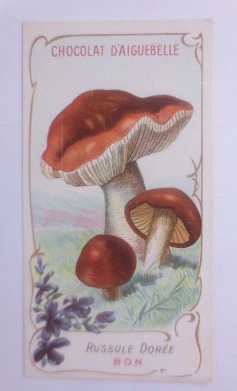 Sammelbild, Chocolat D´ Aiguebelle, Pilze 1910 ♥ (62631)