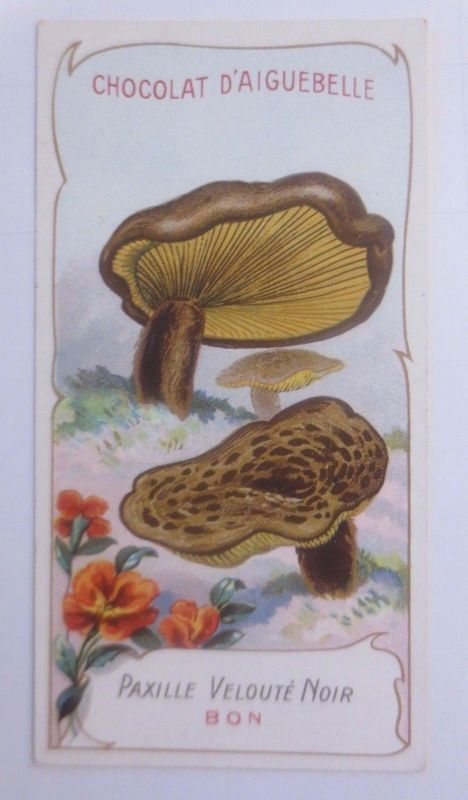 Sammelbild, Chocolat D´ Aiguebelle, Pilze 1910 ♥ (62625)