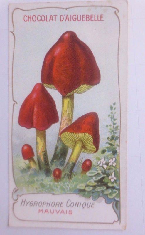 Sammelbild, Chocolat D´ Aiguebelle, Pilze 1910 ♥ (62630)