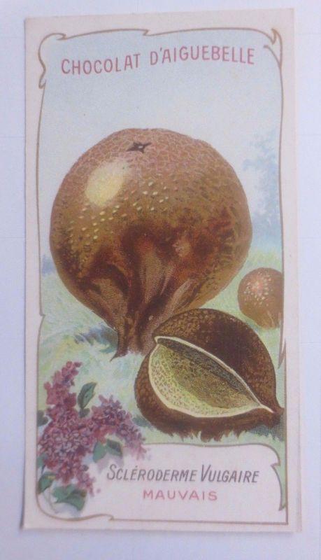 Sammelbild, Chocolat D´ Aiguebelle, Pilze 1910 ♥ (62629)