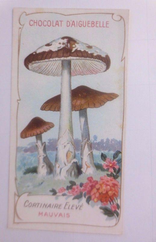 Sammelbild, Chocolat D´ Aiguebelle, Pilze 1910 ♥ (62627)