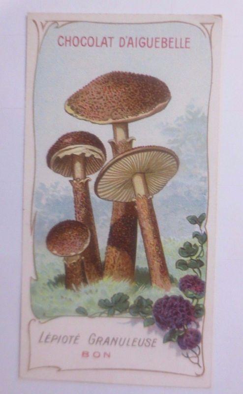 Sammelbild, Chocolat D´ Aiguebelle, Pilze 1910 ♥ (62626)