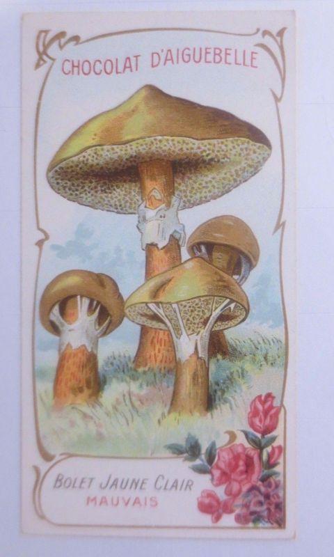 Sammelbild, Chocolat D´ Aiguebelle, Pilze 1910 ♥ (62624)