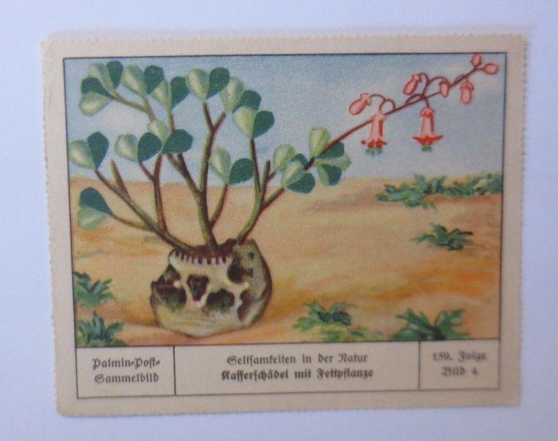 Palmin-Post-Sammelbild, Seltsamkeiten der Natur,  Folge 159, Bild 4 ♥ (8409)