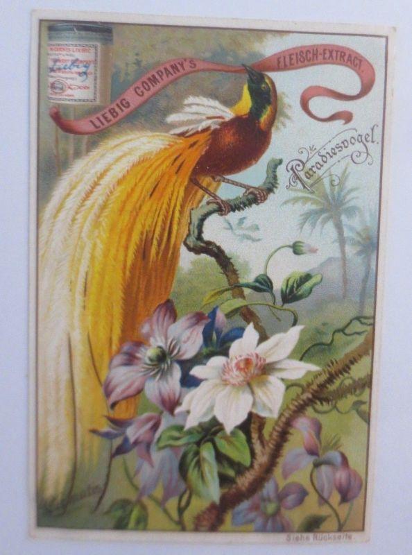 Liebig, Serie 384, Vögel u. Blumen, Paradiesvogel, Clematis ♥ (47680)