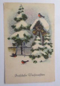 Weihnachten,Vogel, Vogelhaus, Tannen, Winter,   1930  ♥ (67339)