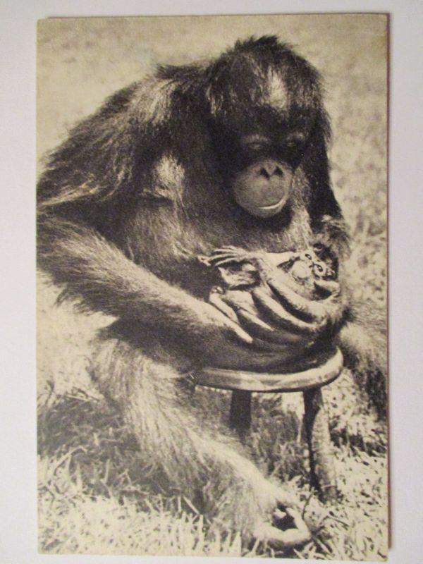 Tiere, Affe, Tierbaby, ca. 50er Jahre (37037)