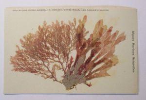 Polen Sonderganzsache 60 Jahre Museum  Post Telekommunikation, 1981 ♥(46559)